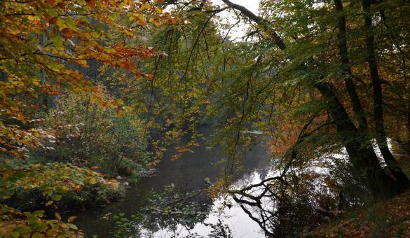 Ressources Naturelles Développement - Forêt d'Ardenne
