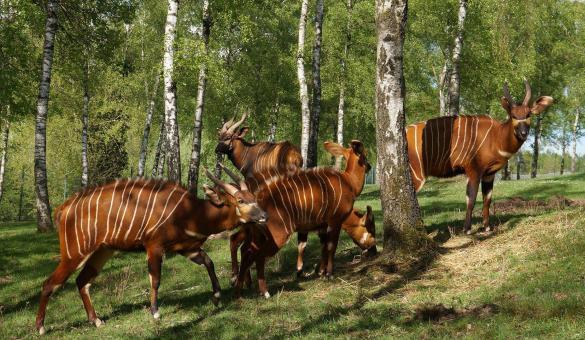 Parc animalier - Monde Sauvage - Safari - Parc - Aywaille