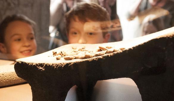 Darcis – chocolat – musée – cacao - artisan pâtissier - chocolatier belge