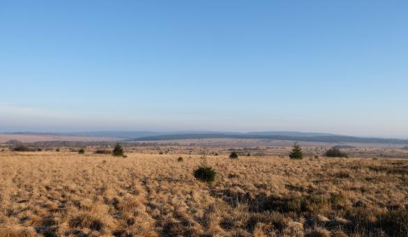 Point de vue sur les tourbes et les landes au Signal de Botrange