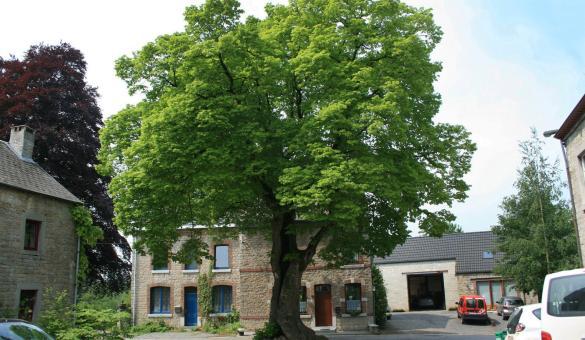 My - Plus Beaux Villages de Wallonie - Vieux Tilleul