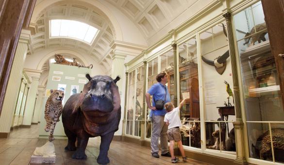 Musée - Histoire naturelle - vivarium - famille - city pass