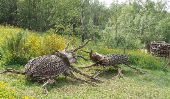 Assemblage - artistique - bois de noisetier - combat de scarabées - Parc Chlorophylle