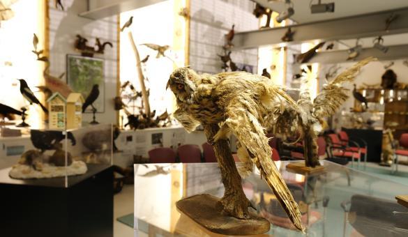 Oiseau empaillé dans le musée