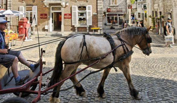 Piétonnier - Durbuy - cheval