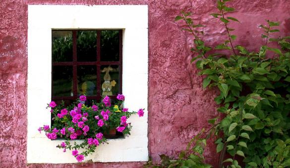 Gaume - Façade fleurie - fenêtre - arbre