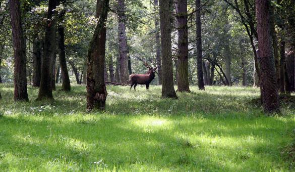 Kom de fauna en flora ontdekken in het Wildpark, op het Domein van de Grotten van Han