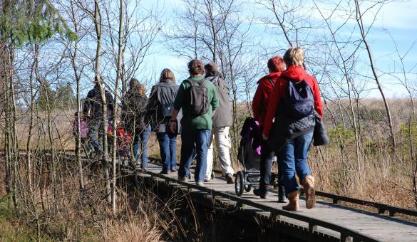 Promenez-vous dans le Parc Naturel Hautes Fagnes - Eifel