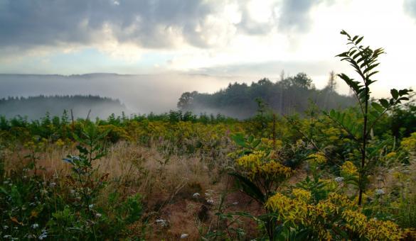 Forêts - Ardenne - Spa