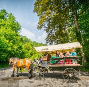 Marche-en-Famenne - Attelages ardennais - promenade en char a bancs