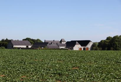 Les plus beaux villages de Wallonie - Ragnies - champ - toît - ciel bleu