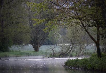 Arboretum Lenoir - Rendeux - Wallonie insolite