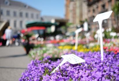 marché - fleurs - enghien - printemps