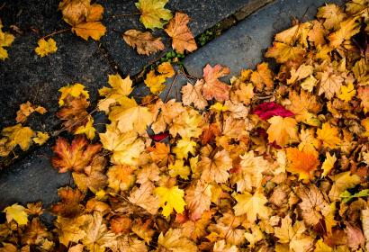 Paysage - automne