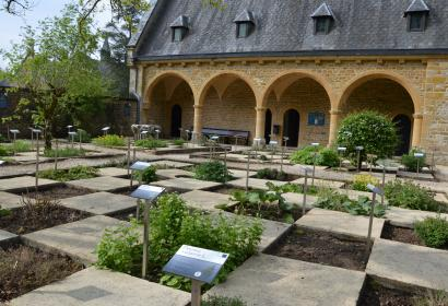 Discover the Garden of Medicinal Plants at the Musée pharmaceutique de l'abbaye d'Orval.