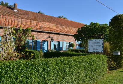 Le vignoble de La Ferme Bleue à Comines - ferme