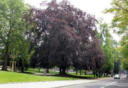 Parc - Reine Astrid - style anglais