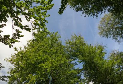 Vue de la cime des arbres d'une forêt à Tenneville