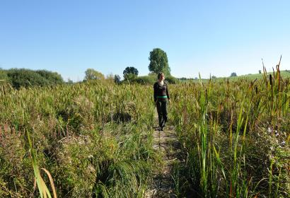 Le marais de la cussignière - Wallonie insolite