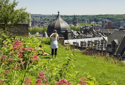 Liège - coteaux de la citadelle - arbre - plante - pelouse