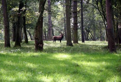 Machen Sie sich auf und entdecken Sie die Fauna und Flora im Tierpark der Domaine des Grottes de Han