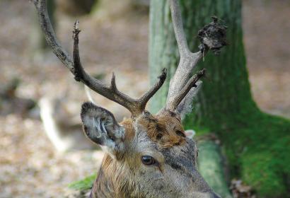 Découvrez les animaux de la forêt ardennaise au Parc à gibier de la Roche