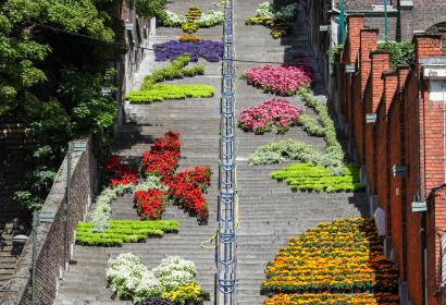 Admire thousand of blooms decorating the Buren Mountain in Liège