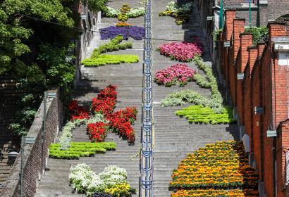 Admirez les milliers de fleurs disposées sur la montagne de Bueren à Liège - Wallonie insolite