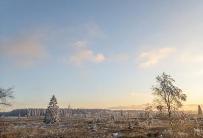 Hautes Fagnes - paysage - neige - hiver